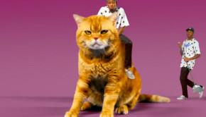 tyler-cat
