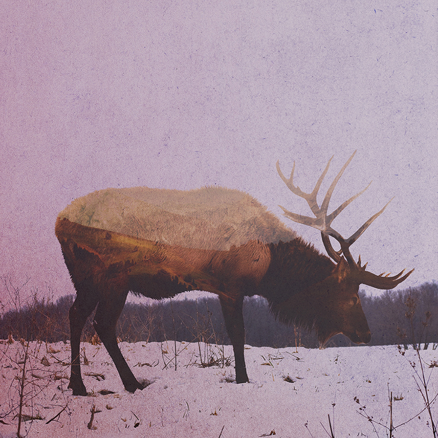 Double-Exposure-Portraits-Of-Wild-Animals-That-Reflect-Their-Habitat1__880