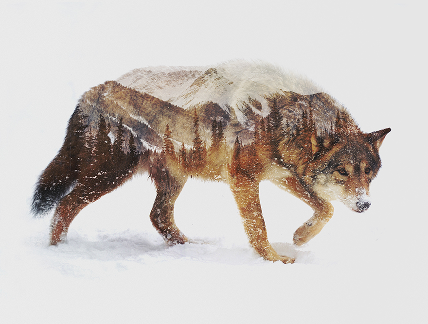 Double-Exposure-Portraits-Of-Wild-Animals-That-Reflect-Their-Habitat3__880