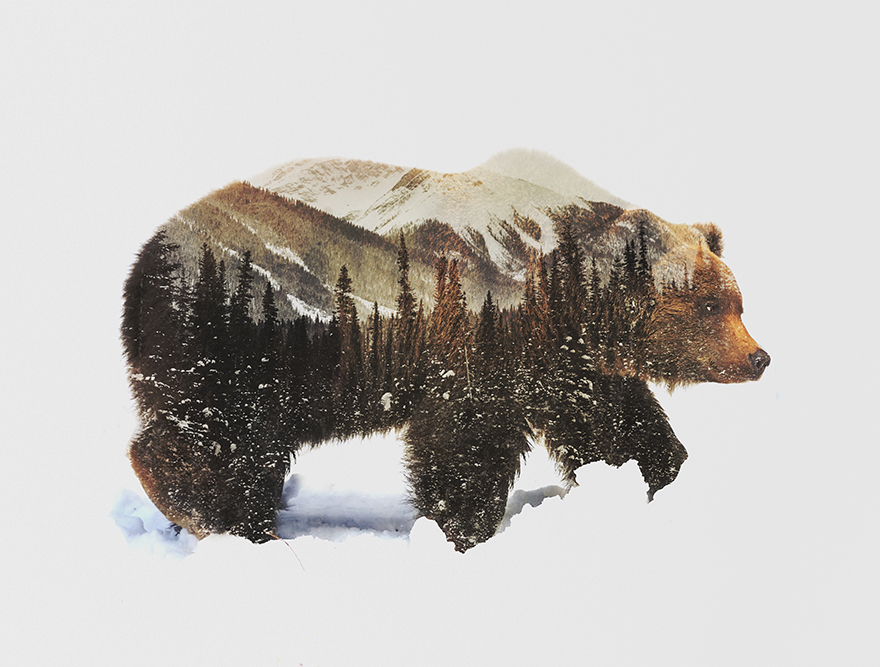 Double-Exposure-Portraits-Of-Wild-Animals-That-Reflect-Their-Habitat5__880