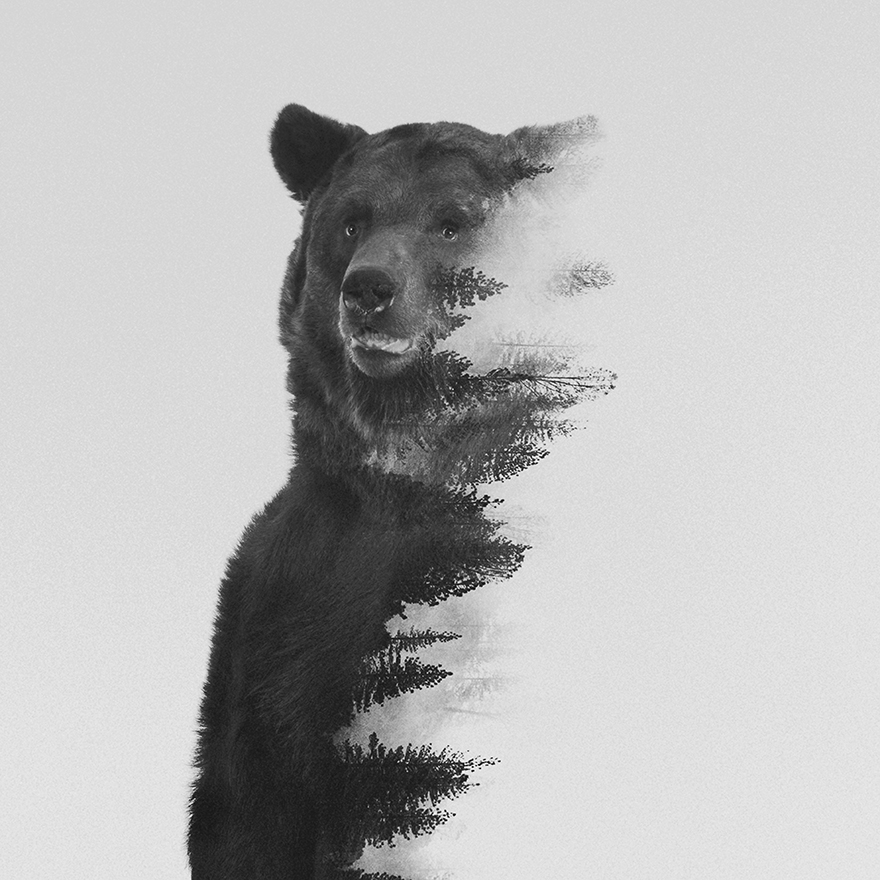 Double-Exposure-Portraits-Of-Wild-Animals-That-Reflect-Their-Habitat__880 (2)