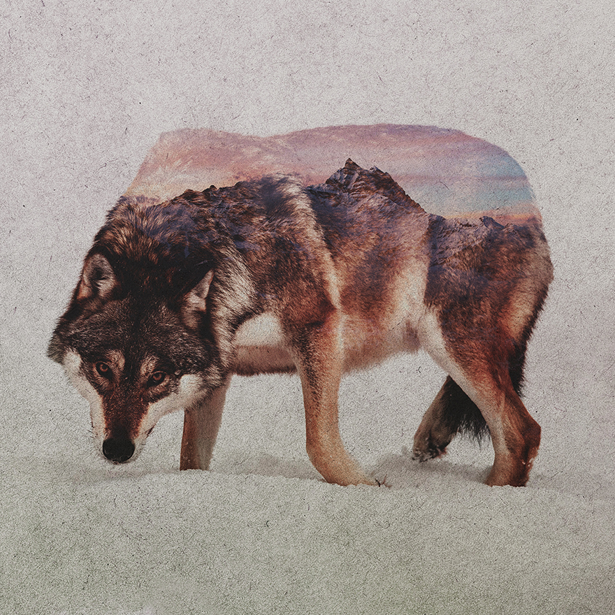 double-exposure-portraits-of-wild-animals-that-reflect-their-habitat-2__880