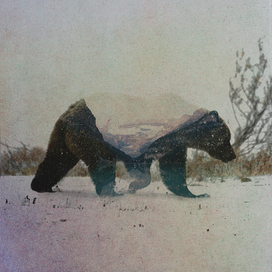 double-exposure-portraits-of-wild-animals-that-reflect-their-habitat-3__880